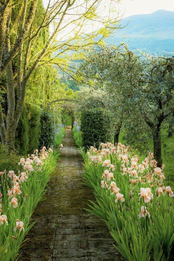 printemps jardin fleurs